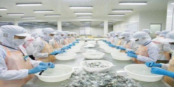 IMPLEMENTACION DE SISTEMA HACCP